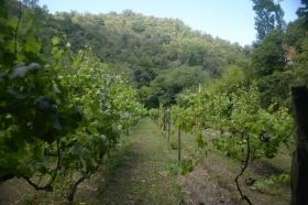 viñedos sepas y vinos